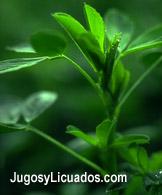 Agua de Limón con Alfalfa, Rica en Hierro, Depurativa y Desintoxicante