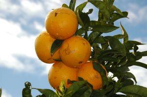 Beneficios de la Naranja en la salud