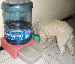 bebedero para mascotas