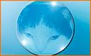 Insertar Imágenes en Esferas