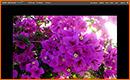 Photoshop Express el Photoshop en Línea