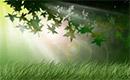 Como crear un verde y luminoso bosque con photoshop