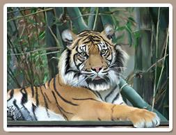 Pintura Digital de un Tigre de Bengala