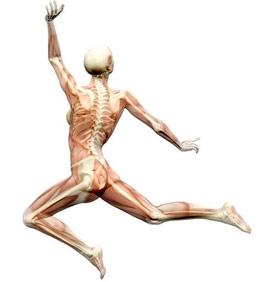 Calcio y Vitamina D Combinados con mas Consumo de Proteína Fortalece los Huesos